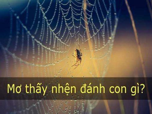 Mơ thấy nhện là điềm báo gì – Đánh con số lô đề nào may mắn?