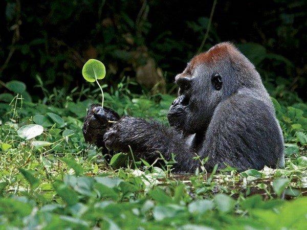 Nằm mơ thấy khỉ đánh xổ số con gì dễ trúng nhất